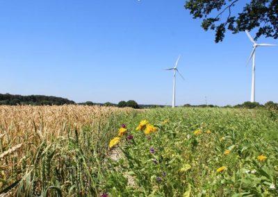 Energiepflanzen anbauen & Artenviefalt fördern