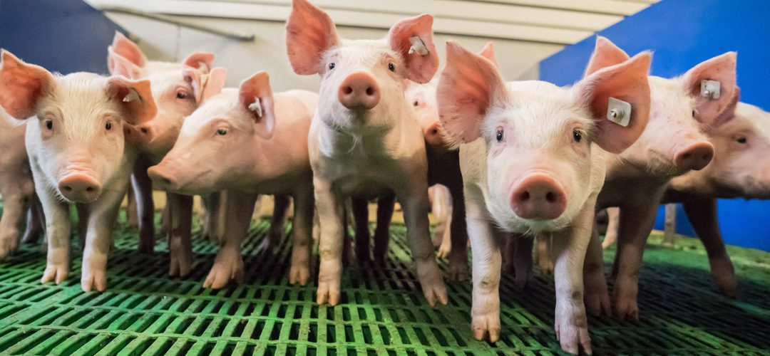 Tiergesundheitsindex einführen